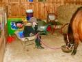 Pony Hopp3.jpg